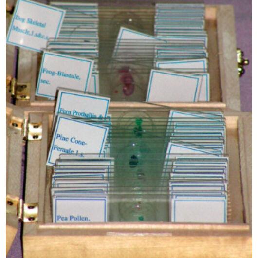 Mikroszkóp preparátumok (25db, Botanika: A növények mikrovilága) (#D) Prep25bo